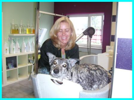 Ausbildung zum Hundefriseur